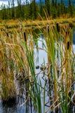 Vermillion Lakes, Banff National Park, Alberta, Canada stock image