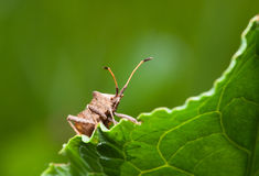 Vermin bug Stock Images