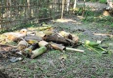 Verminder stukken van een banaanboom voor huishoudengebruik dat in een dorp wordt gezien stock afbeelding