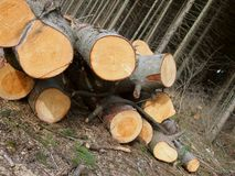 Verminderde bomen Royalty-vrije Stock Foto's