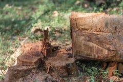 Verminderend bomen in het wilde leiden tot het verminderen van zuurstofniveau en ecologie milieulandbouw royalty-vrije stock foto