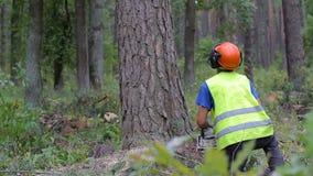 Verminderend een boom met een kettingzaag, neer valt de boom stock videobeelden