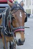 Vermoeid paard in het Central Park Stock Afbeeldingen