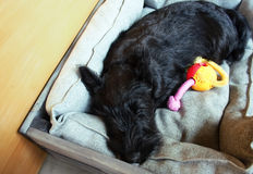 Vermoeid puppy Stock Foto