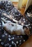 Vermoeide hond Royalty-vrije Stock Fotografie