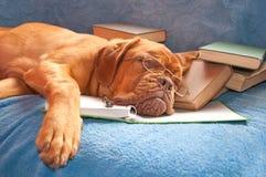 Vermoeide in slaap hond