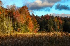 Autumn colors from Vermont. Vermont autumn colors with clouds royalty free stock photo