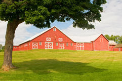 Vermont barn and farmyard. Rural Vermont farm with a red barn Royalty Free Stock Photos