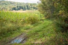 Vermont en otoño Imagen de archivo libre de regalías