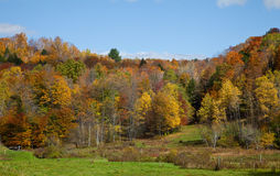 Vermont Fall Foliage Stock Images