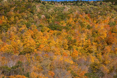 Vermont Fall Foliage Royalty Free Stock Photography