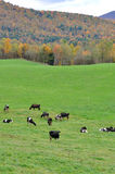Vermont Fall Foliage, Mount Mansfield, Vermont Stock Photo