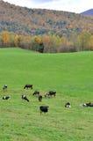 Vermont Falllövverk, montering Mansfield, Vermont arkivfoto