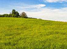 Vermont Landscape. Wolcott, Vermont landscape of grass and trees Stock Photos