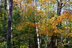 Vermont, USA Lizenzfreie Stockfotografie