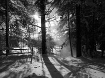 Vermont Winter Trees. Hike through Vermont forest in winter Stock Photo
