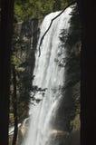 Vernal cai através das árvores Fotografia de Stock Royalty Free