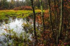 Vernal damm, Wilton Park And Preserve, Saratoga County, New York royaltyfri foto