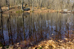 Vernal pool with tree and sky reflections, Connecticut. Vernal pool in Shenipsit State Forest, Somers, Connecticut, with boulders on the shore in early spring Stock Image