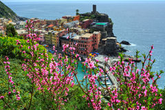 Vernazza village on cliff rocks and flowers of peach. Seascape in Five lands, Cinque Terre National Park, Liguria Italy Europe. Seascape in Five lands, Cinque royalty free stock photos