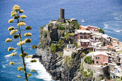 Vernazza village Italy. Aerial view of Vernazza village, La Spezia, Liguria, Italy. Flowering plant in foreground of picture stock photos