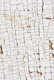 Vernice bianca 2 della sbucciatura ed incrinato Fotografia Stock