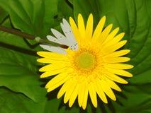 Vernice della madre natura dai numeri fotografie stock libere da diritti