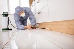 Vernichter-Spraying Pesticide In-Küche lizenzfreie stockfotografie