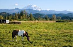 Vernici il cavallo e monti più piovoso fotografie stock