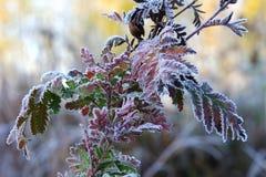 Vernicia la mattina di autunno Fotografie Stock