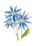 Verniciatura blu dei fiori Fotografia Stock Libera da Diritti