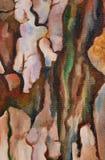 Verniciatura di colori di olio Fotografie Stock