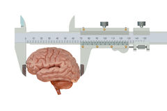Vernier caliper with brain Stock Photo