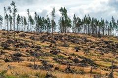 Vernietigd bos Stock Fotografie