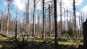vernietigd bos door de ziekte van de schorskever stock footage