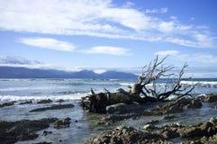 Vernietigd dood hout op kust Stock Foto's