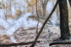 Vernietigd door tropisch bos te branden royalty-vrije stock afbeeldingen