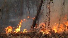 Vernietigd door tropisch bos te branden stock videobeelden