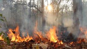 Vernietigd door tropisch bos te branden stock video