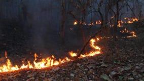 Vernietigd door tropisch bos te branden stock footage