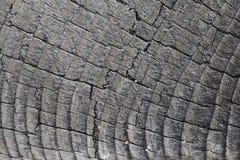 Vernietigd hout Royalty-vrije Stock Afbeeldingen