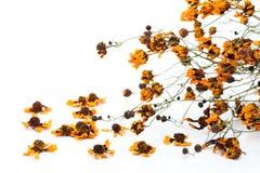 Vernietigde bloem Stock Afbeelding