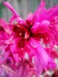Vernietigde bloem, maar geen minder mooi stock foto's