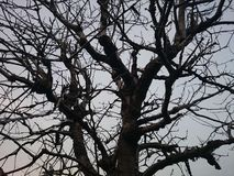 Vernietigde boom Stock Afbeelding