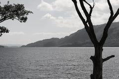 Vernietigde boom bij het meer in Schotse Hooglanden in zwart-wit Stock Afbeeldingen