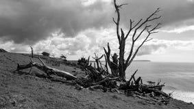 Vernietigde boom door het overzees Royalty-vrije Stock Foto