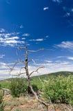 Vernietigde boom in onvruchtbaar, landelijk landschap in het Zuidwesten van de V.S. royalty-vrije stock foto's