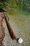 Vernietigde boomboomstam in water op kust van Koenigssee-meer Stock Afbeeldingen