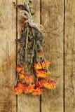 Vernietigde chrysant Stock Afbeeldingen