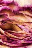 Vernietigde en droge roze en geel nam bloemblaadjes toe Royalty-vrije Stock Fotografie